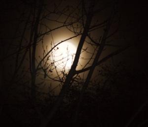 Full Moon Shining Through Trees
